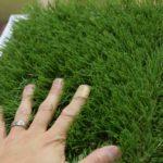 人工芝は触ると痛い?
