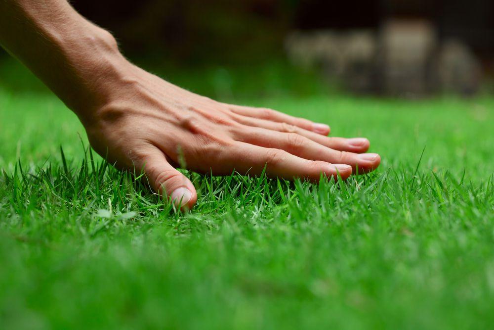 人工芝でも虫は発生する?