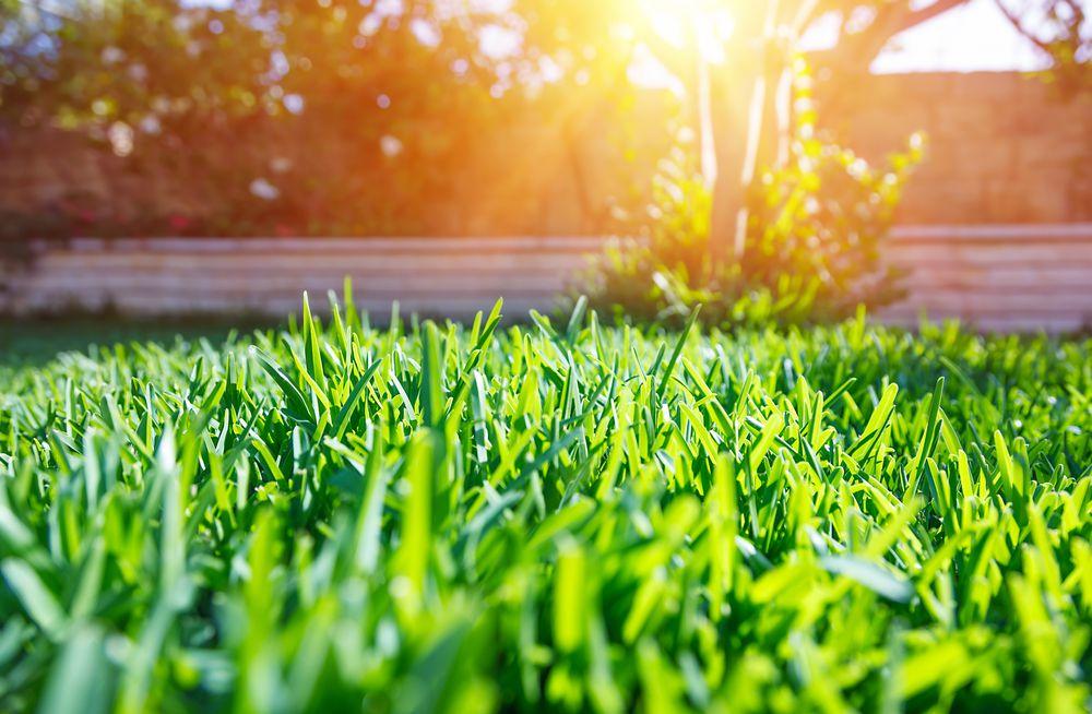 人工芝を張り替える時期は?