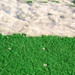 人工芝は雪が積もっても大丈夫?対策を紹介
